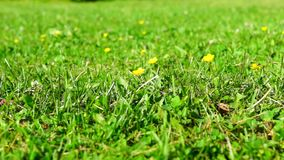 Panorama of lawn with low perspectives stock video footage