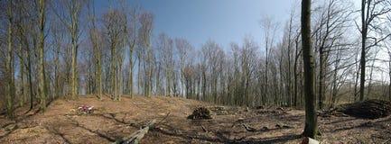 panorama leśna wiosny Fotografia Stock