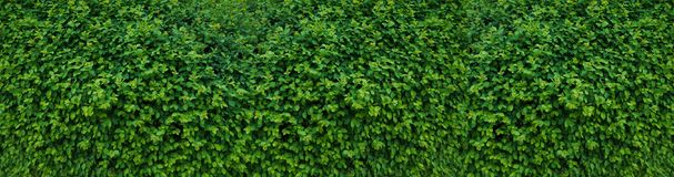 Panorama with leaves. Decorative wall with green leaves. Stock Image