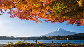 Panorama liści klonowych czerwona góra Fuji Zdjęcia Royalty Free