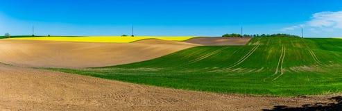 Panorama luminoso del terreno coltivabile Giacimento della colza, concetto di area coltivata immagini stock libere da diritti