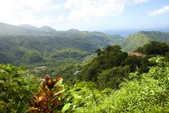 Panorama of lush Dominica  Caribbean. Lush forests of Dominica island, Caribbean Stock Photography
