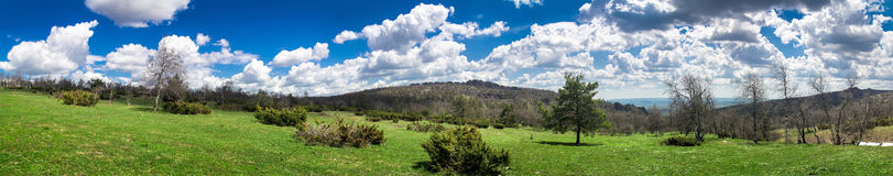 Panorama of the lush green spring meadows and trees Royalty Free Stock Image