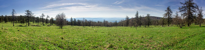 Panorama of the lush green spring meadows and trees Stock Images