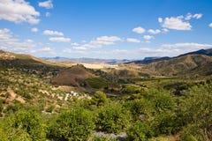 Panorama magnífico de cercar bosques verde-oliva foto de stock