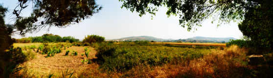 Panorama of Maltese Countryside in May. Panoramic view of typical Maltese country side in late spring looking out from near Kennedy Grove Stock Photos