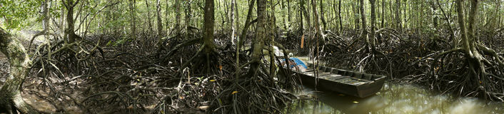 Panorama of Mangrove Forest Stock Photography