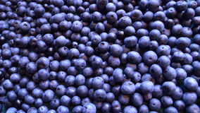 Panorama of many blueberries royalty free stock photo