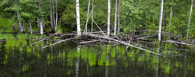 Panorama of a marsh. Royalty Free Stock Image