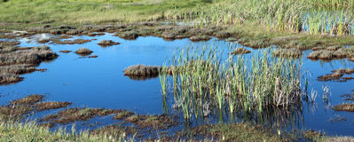Panorama of Marshy Wetlands Stock Photo