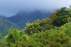Panorama of Martinique, Caribbean. Panorama of rainforests in Martinique royalty free stock photography