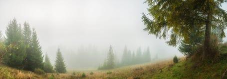Panorama med den magiska skogen royaltyfri fotografi