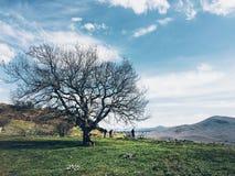 Panorama med ett träd Royaltyfri Bild