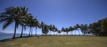 Panorama med kokosnöten gömma i handflatan Arkivfoton