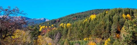 Panorama med träd Autumn Colors, gräsplan, guling Arkivbilder