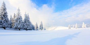 Panorama met bomen in sneeuw Stock Afbeelding