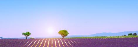 Panorama met purpere Lavendelgebieden, Valensole-plateau, de Provence, Frankrijk stock foto's