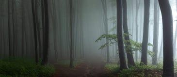 Panorama mgłowej lasowej bajki straszni przyglądający drewna w a. M. zdjęcie stock
