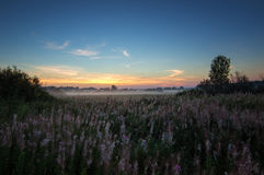 Panorama of misty morning in a field in summer, Russia, Ural Royalty Free Stock Image