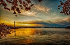 Panorama mit einem Weitwinkelobjektivteil des Gezeiten- Beckens bei dem Sonnenaufgang während Cherry Blossom Festivals stockbild