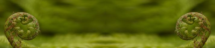 Panorama mit Farnen Lizenzfreie Stockfotografie