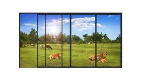 Panorama- modernt fönster med ett lantligt landskap Arkivfoto