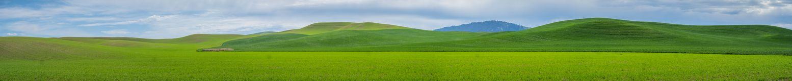 Panorama: Montículo de Kamiak no Palouse Fotografia de Stock