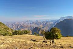 Panorama, montanhas de Simien, Etiópia Fotos de Stock Royalty Free