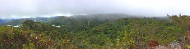Panorama - moosiger Wald Stockbild