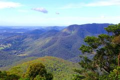 Panorama of tropical rainforest in Tamborine Mountain National Park, Queensland, Australia Stock Images