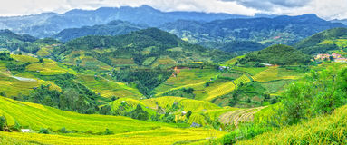 Panorama mountain with beautiful terraced fields Royalty Free Stock Image