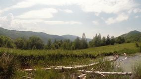Panorama of mountain bogs in which lie the old birch and dragonflies flying. High in the mountains of ancient Europe in all ponds and puddles in the late spring stock video footage