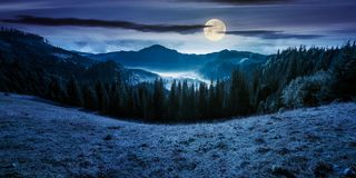 Panorama of mountain and foggy valley at night. Panorama of mountain and foggy valley. beautiful landscape with spruce forest on the hill. wonderful weather in Royalty Free Stock Image