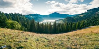 Panorama of mountain and foggy valley. Beautiful landscape with spruce forest on the hill. wonderful weather in Apuseni Natural Park of Romania at sunrise stock photography