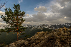 Panorama mountain spring landscape. Tatry.  stock photos