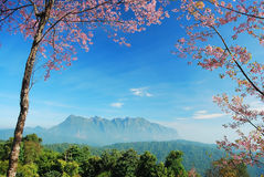 Panorama mountain sunset. In Thailand for background design royalty free stock photography