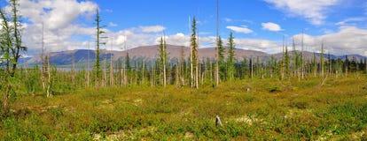 Panorama mountain tundra on the Putorana plateau. Stock Photo