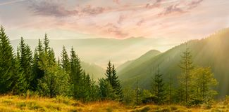 Panorama of the mountain valley with fog at sunrise. Panorama of the mountain valley filled  with fog with meadow and trees in the foreground at sunrise Royalty Free Stock Images