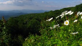 Panorama of mountain wild flowers. A panorama of the mountains with white and yellow wildflwoers Stock Photography