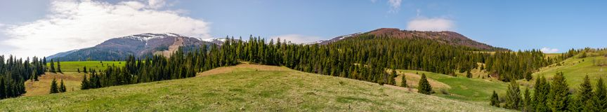Panorama of mountainous landscape in springtime. Lovely scenery with spruce trees on grassy hillsides. mountain ridge with snowy peaks in the distance Stock Image