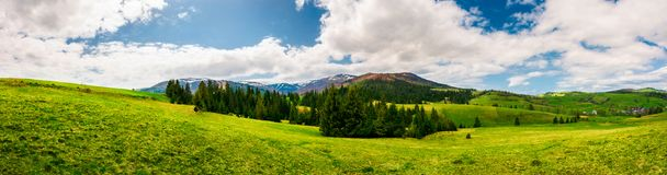 Panorama of mountainous landscape in springtime. Spruce forest on a grassy hills in the valley of Carpathian mountain. beautiful view of Borzhava mountain Royalty Free Stock Photography