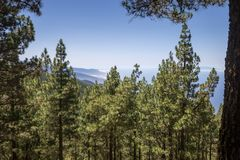 Panorama of mountains and conifer wood, Las Lagunetas, Tenerife, Canary Island, Spain Royalty Free Stock Photos