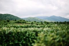 Panorama of mountains stock images