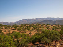 Panorama of mountains with trees Royalty Free Stock Photo
