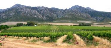 Panorama of mountains and vineyard Royalty Free Stock Photos