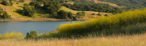 Panorama of mustard field and oak grassland Royalty Free Stock Photo