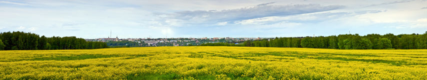 Panorama of mustard plants flowering along the. Field. Mustard blossom in front, town landscape on the back, forest on the sides of picture Royalty Free Stock Images