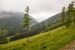 Panorama nära Schneeberg, i lägre Österrike Arkivbilder