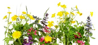 panorama na wiosnę kwitnie zdjęcie stock