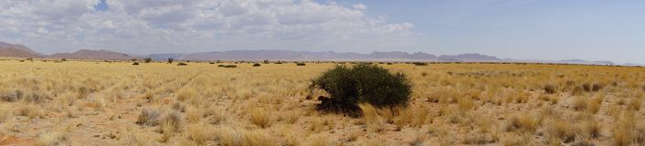 A panorama in namibia. Area of gras an bush in Namibia Royalty Free Stock Images